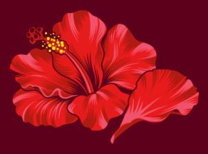 Hibiscus original