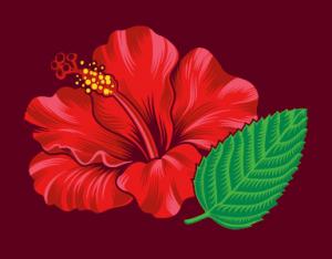 Hibiscus mint